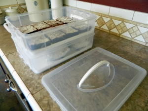 Snapware 2-Layer Cupcake and Cake Carrier